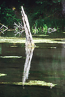 FOREST SWAMP<br />