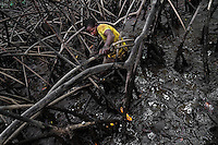 A Colombian boy picks shellfish from the mud among the tree roots in the mangrove swamps on the Pacific coast, Colombia, 16 June 2010. Deep in the impenetrable labyrinth of mangrove swamps on the Pacific seashore, hundreds of people struggle everyday, searching and gathering a tiny shellfish called 'piangua'. Wading through sticky mud among the mangrove tree roots, facing the clouds of mosquitos, they pick up mussels hidden deep in mud, no matter of unbearable tropical heat or strong rain. Although the shellfish pickers, mostly Afro-Colombians displaced by the Colombian armed conflict, take a high risk (malaria, poisonous bites,...), their salary is very low and keeps them living in extreme poverty.