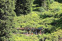 On the Ayder Plateau, an apiary on piles protected by an electric fence. ///Sur le plateau d'Ayder, un rucher sur pilotis en forêt protégé par a clôture électrique.