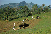 Mexican Indians plowing field with oxen-driven plow in Sierra de Puebla mountains, Puebla State, Mexico.