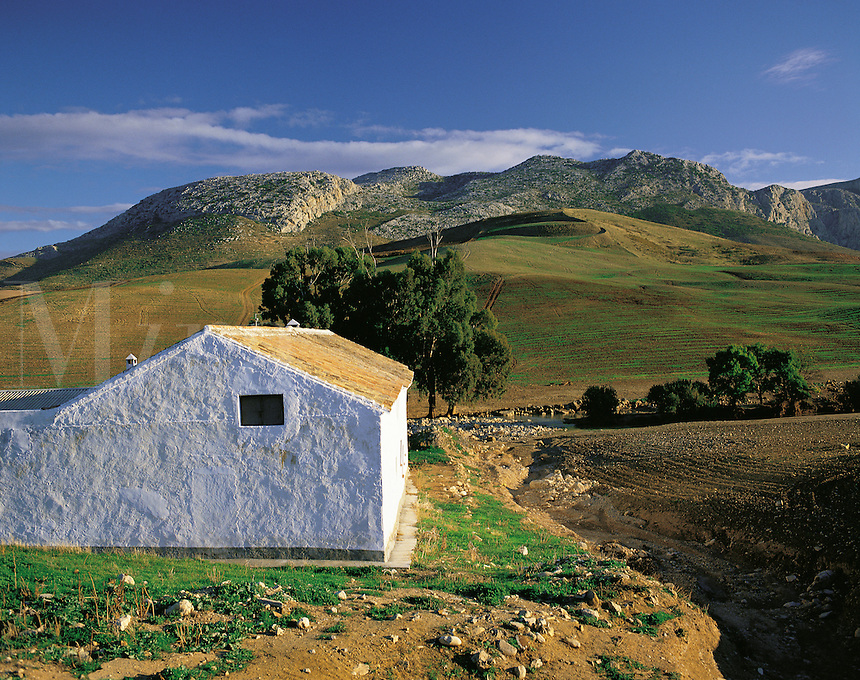 Lonely white-washed farm building with rocky hills behind in the Serrania de Ronda, southern Spai