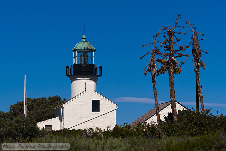 Old Point Loma Light standing proud, seen end-on from the south on a sunny winter day.  The light is in Cabrillo National Monument near San Diego, CA.  Framing the lighthouse are three withered agave inflorescences along with fields of green bushes and trees.  The assistant keeper's quarters are visible as a separate white building behind the inflorescences.