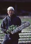In early May, a radish farmer poses in his field in Aomori Prefecture, on Northern Honshu, Japan. Most fields are prepared for the planting season by a workforce made up of women and men, who plant and cultivate the rice seedlings by hand. Photo by Jim Bryant ©2008. All Rights Reserved.