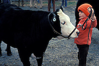 One young boy in red hat jacket show off his 4H farm family project steer cow cattle