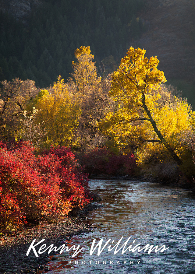 Provo River in Autumn Fall Colors, Utah, USA.