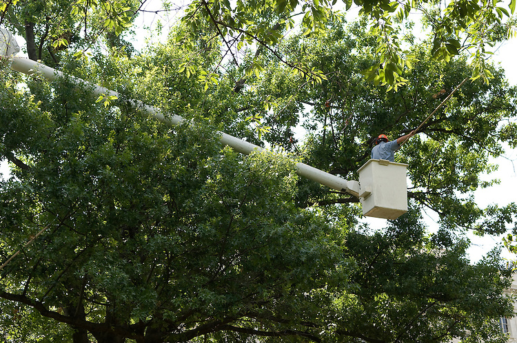 "Richard Prince of the AOC Tree Division works from a ""cherry picker"" in the Upper Senate Park."