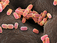 Foodborne Pathogens
