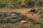 Art Wolfe gives caimans their close-up in Brazil's Pantanal.  He was filming for his public television series, Art Wolfe's Travels to the Edge.