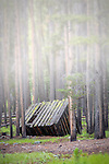 An old cabin sits in the Montana woods.