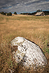 Weathered wooden barn, quartz outcropping, Calaveras County, Calif.