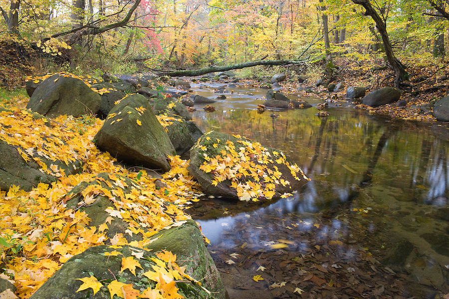 A stream in Madison County, VA. Photo/ Andrew Shurtleff