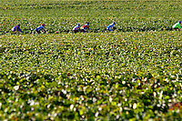 vineyard cyclists beaune cote de beaune burgundy france