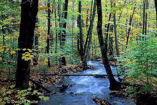 WF23-012z  Stream through woods