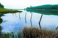 Old fence in Novato Cemetary Marsh, Rush Creek Open Space Marin County in spring flood