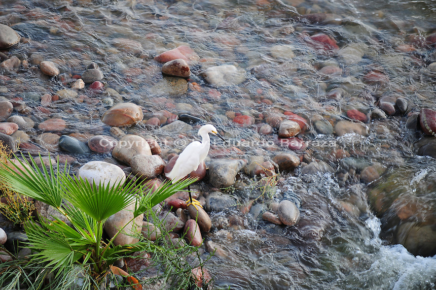 Tempe, Arizona. A white heron standing on a rock just above water being released by the Tempe Town Lake dams. This area is west of the lake and is part of the Salt River bed, which is usually dry. Photo by Eduardo Barraza © 2015