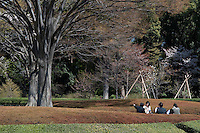 A group of people picnic under the branches of a large tree at Higashi-Gyoen