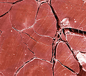 Human tendon, XS, SEM X60