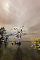 Cloudy moonlit night at Albemarle Sound. I used a flashlight to light the cypress tree and the grass on the right side of the image.