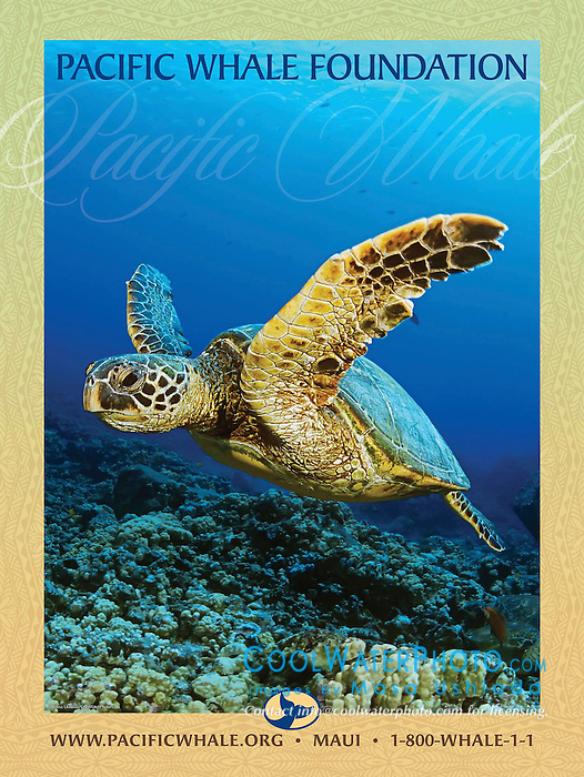 Pacific Whale Foundation 2010 Summer Campaign Poster, adverting use, USA, Image ID: Green-Sea-Turtle-0001-V