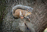 A squirrel relaxes on Duke's residential quad on a Fall morning.
