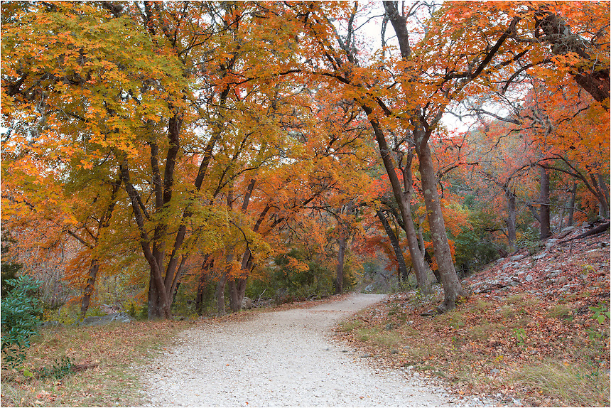 Follow the path along the East Trail at Lost Maples State Park and you'll enjoy views such as this. Each November, the maple leaves change from green to gold, orange, and red. The colors of Autumn can be quite striking, even in Texas! Enjoy lunch in the sleepy town of Vanderpool or run over to the Lost Maples Cafe. This is a great place to spend a day or two in the Hill Country.
