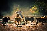 Jeff Meyer rounding up the cows at Hidden Creek Ranch, Harrison, Idaho.