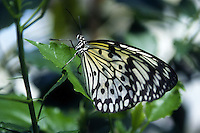 Animali.Animals.Farfalla.Butterfly....
