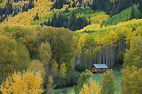 Log cabin aspen trees and Cottonwoods in fall colors, Dolores, San Juan National Forest, Colorado, USA