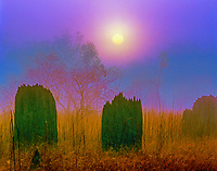 Magnetic anthills in sunrise fog, Litchfield National PArk, AUstralia, top end of Northern Territory, anthill situated along earth's magnetic field, near Darwin