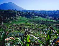 Rice Terraces, Island of Bali, Central Bali, Indonesia