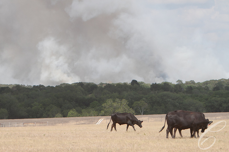 Smoke rises from the Dyer Mill fire on Monday June 20, 2011 in Grimes County, Texas east of Whitehall.