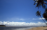 Recife, Brazil. Beach with a palm tree in right foreground and line of trees in left distance.