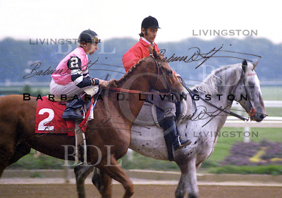 Affirmed (Exclusive Native), Steve Cauthen up, 1978 Marlboro Cup