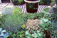 Tricolor sage herb and lavenders planted in mixed garden bed with hosta perennials, Alchemilla, Euphorbia, ferns, with patio and ceramic planter container. Foliage and flowers and herbs