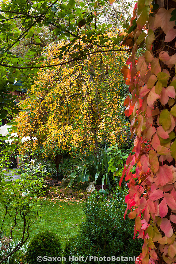 Gay Edelson garden in Lafayette, California with fall color