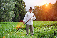 Farmer using scythe to mow grass traditionally in Estonia.