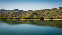Olive Trees Growing Next to Reservoir, Andalucia, C&oacute;rdoba, Izn&aacute;jar, Spain - Aug 2014<br /> <br /> A drought in southern Spain looks set to see a rise in the price of Olive Oil.<br /> Southern Spain is the world's biggest producer of Olives