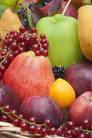Harvested fruits and berry, apples malus, pears pyrus, persimmon, currants, grapes, blackberries,  in autumn fall in basket,
