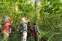 Viewing Chimpanzees in Kibale National Forest, Uganda, East Africa