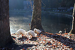 Ducks clean themselves at a pond in Levi Jackson State Park in London, Ky. on October 25, 2012. Photo by Quianna Lige
