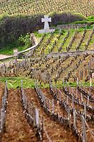 pinot noir vineyard la romanee conti vosne-romanee cote de nuits burgundy france