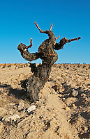 tempranillo gobelet training old vine sandy soil Bodegas Vinas del Cenit, DO Tierra del Vin de Zamora spain castile and leon