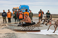 Bovanenkovo ,Yamal Peninsula, Russia, 09/07/2010..Gazprom workers photograph one another while Nenets sledges and reindeer use insulation material to cross a new Gazprom built road while heading north to the Russian Arctic coast. The Nenets had previously been unable to follow their traditional migration routes because new roads constructed by Gazprom damage the sledges.