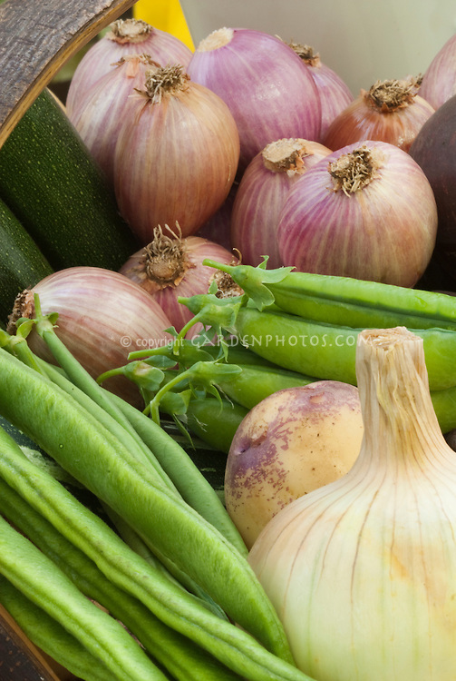 Shallots, beans, peas, onion, potatoes in harvest basket
