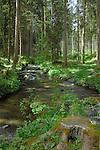 Alpine stream in the woods. Vilsalpsee lake area. Reutte district, Tyrol,Tirol, Austria