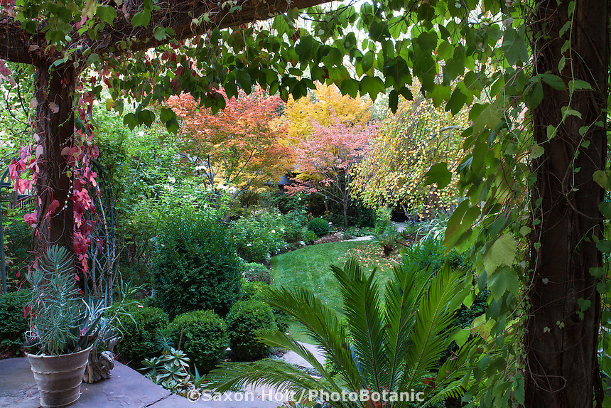 Fall color in trees flanking lawn path as seen from pavilion in Edelson Garden