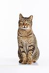 20160605 Cats-Martha