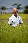 Kazuyoshi Otomo looks at the rice approaching maturity in his fields in Sendai, Miyagi Prefecture Japan on 02 Sept. 2012. Otomo cleaned up his post-tsunami rice and joined forces with a local brewery to make a Recovery Sake. Photographer: Robert Gilhooly