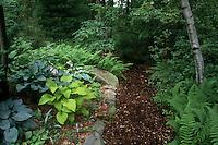 Shade garden path: mulched wood, perennials foliage plants hostas mixture, pulmonaria, ferns, birch tree Betula, shady plants combination view scene