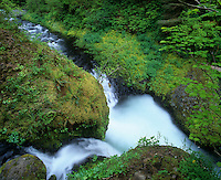 Small stream cascading into Eagle Creek, Columbia River Gorge National Scenic Area, Oregon, USA.
